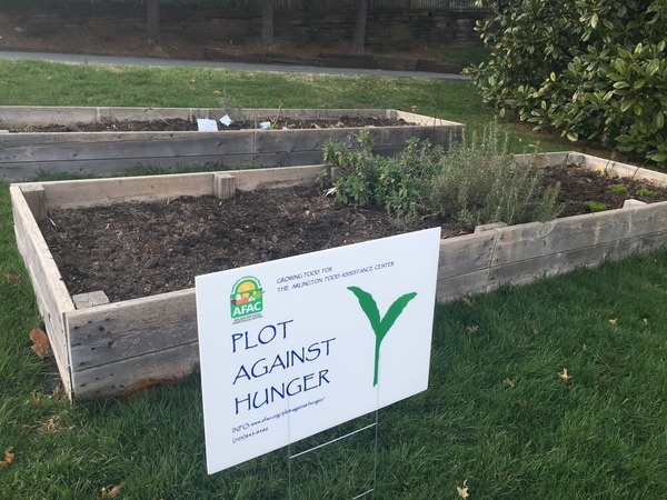 ACoB' Plot Against Hunger Garden