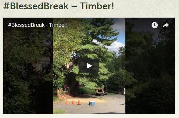 #BlessedBreak - Timber